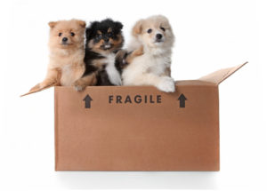 Moving with Pets | Moving | Rainbow Movers | Boston, MA